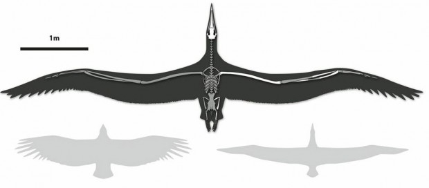 pelagornis_sandersi_worlds_largest_bird_1