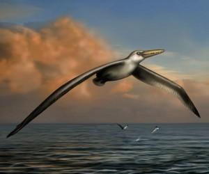 World's Largest Bird Had 24-foot Wingspan