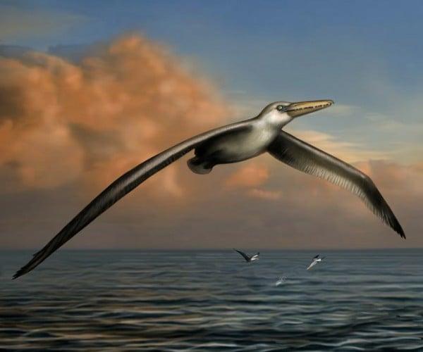 World's Largest Bird Had 24-foot Wingspan