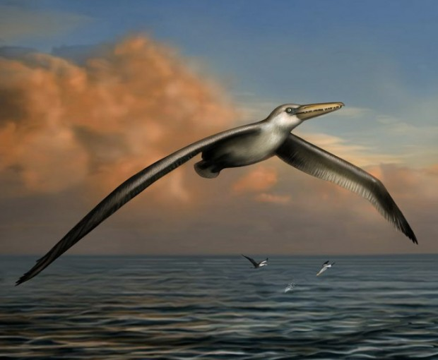pelagornis_sandersi_worlds_largest_bird_2