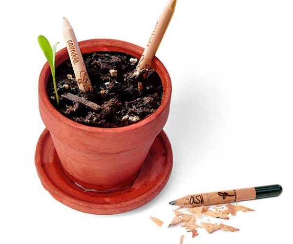 Sprout Growing Pencils Sharpen Your Gardening Skills