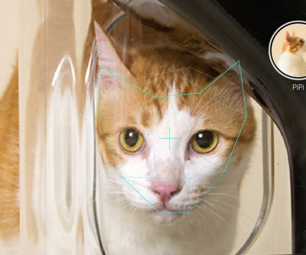 Bistro Smart Feeder Uses Facial Recognition to Give Your Cats Proper Portions