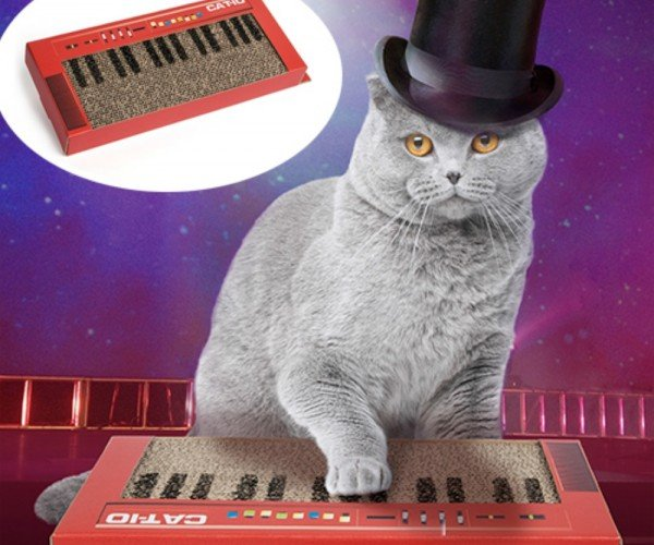 Cat Keyboard Scratcher: Rhythmemes and Blues