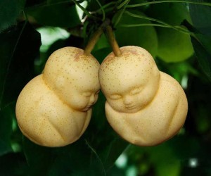 Pears Shaped Like Babies, Surprisingly Not Raised by an Au Pair