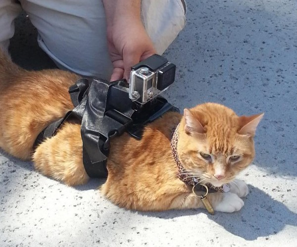 Cat-worn Device Sniffs out Wi-Fi Access Points: WarKitteh