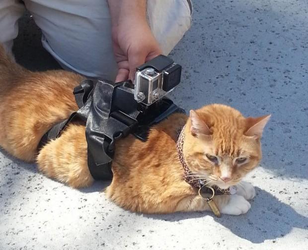 warkitteh-wi-fi-sniffer-cat-collar-by-gene-bransfield