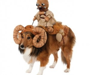 Star Wars Dog Costumes Will Make Your Dog Hate You
