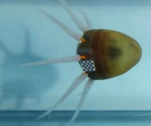 Octobot: Just When You Thought It Was Safe to Go Back in the Water