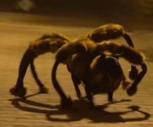 Spider-Dog, Spider-Dog… Does Whatever a Spider-Dog Does