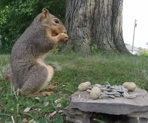 GoPro's and Squirrel's First Date Sure Got Nasty