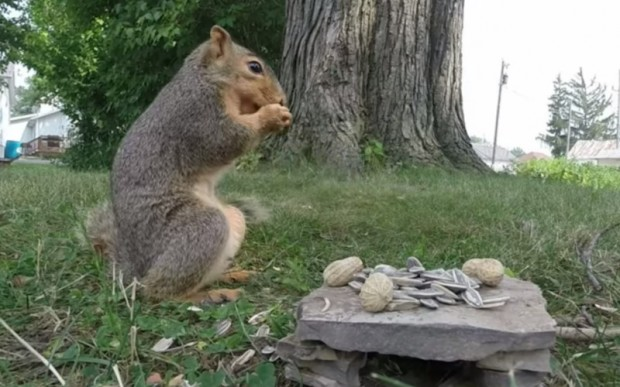 squirrel_gopro_sex