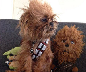Chewbacca Dog Is Adorable