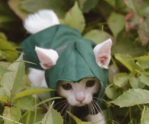 Assassin's Kitteh: Cute Kills