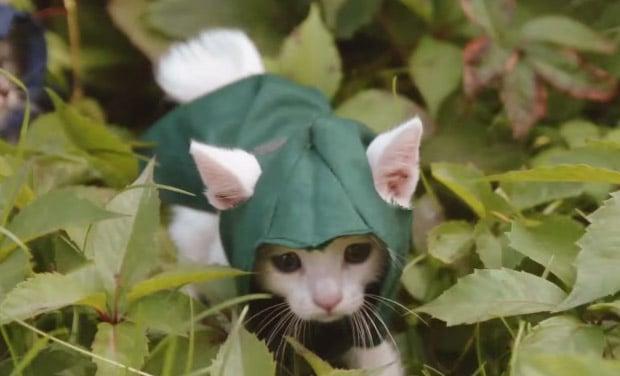 assasins_kitty_1