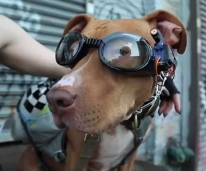 Create a Pair of Laser Goggles for Your Dog