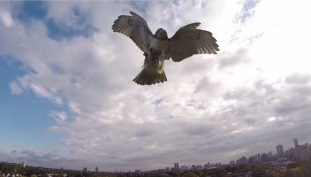 hawk_attack_drone