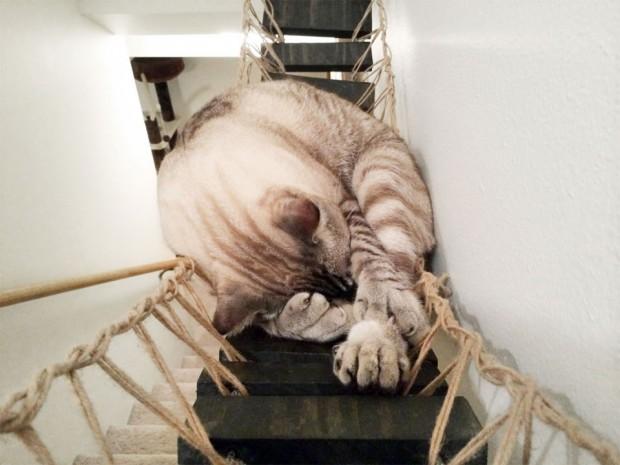 indie-cat-3