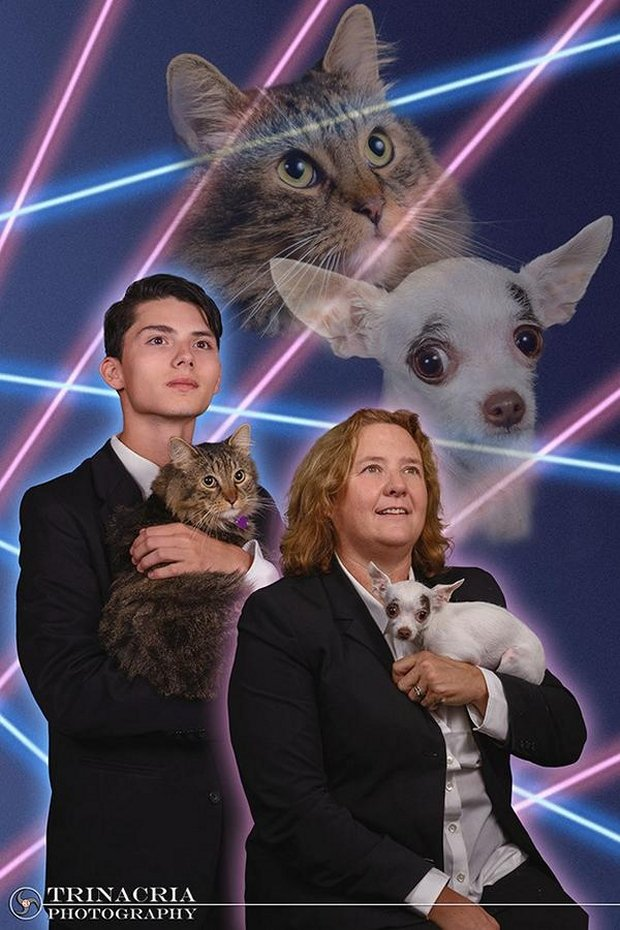 laser cat and dog