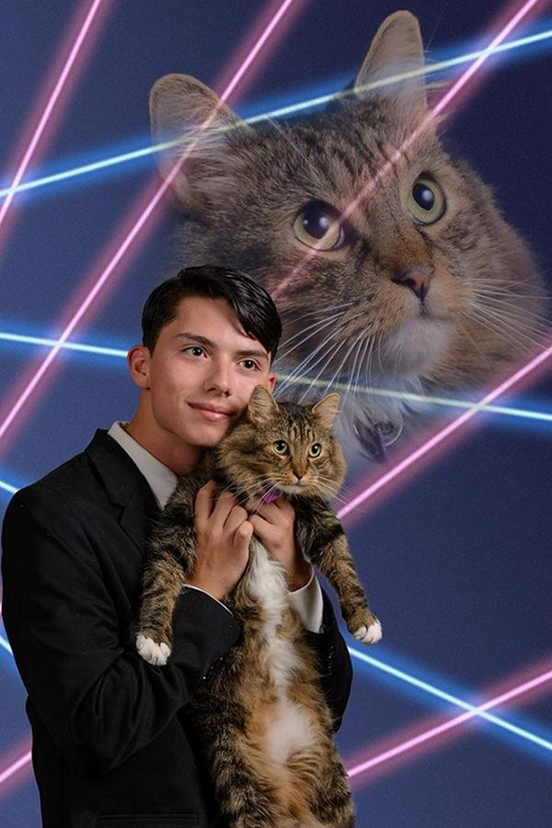 laser cat and dog1