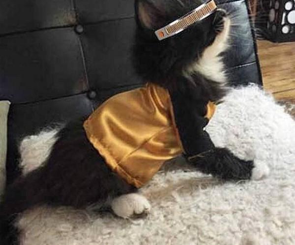 Cat Cosplays Geordi Laforge: LeVar Purrton