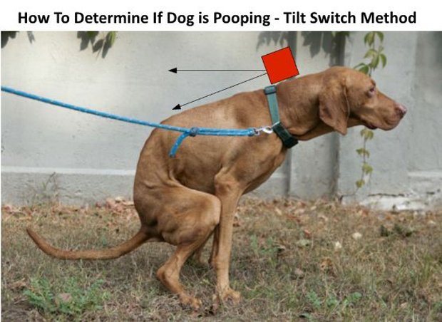 dog-poop-tracker-by-eric-tsai-2
