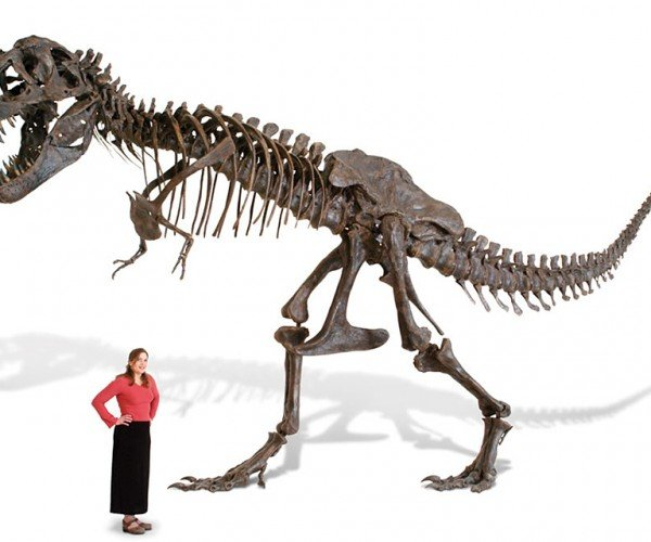 Life-size T-Rex Skeleton Replica will Take Your Budget Back to the Cretacious