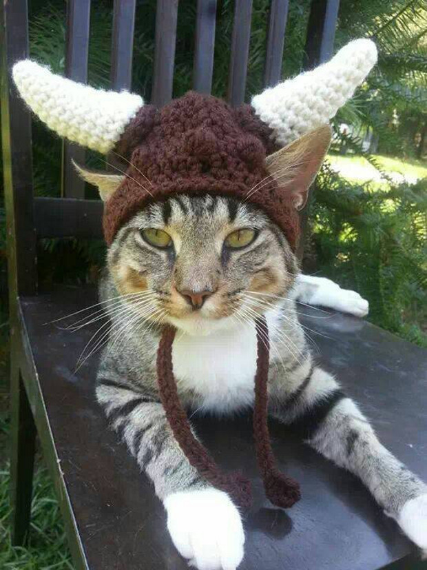 viking_cat_hat_2