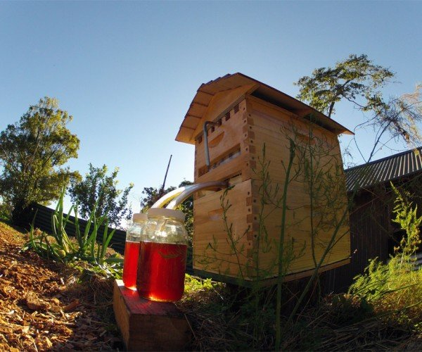 Flow Hive Lets You Steal Honey from Bees with Minimum Fuss