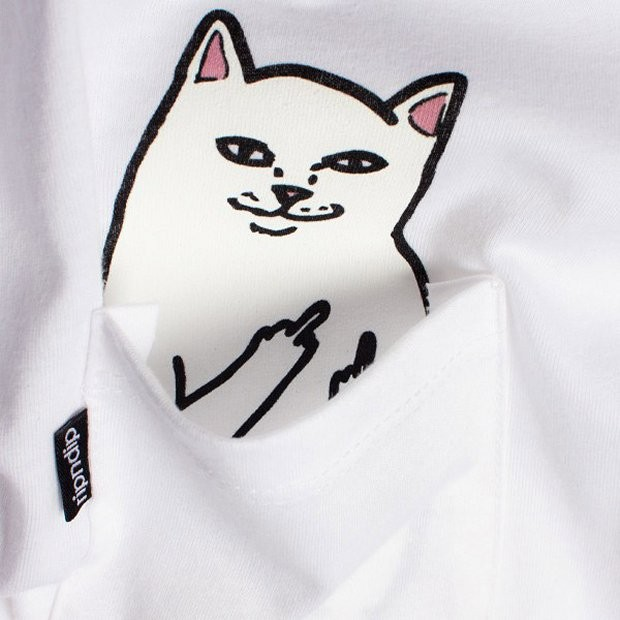 pocket_cat_3
