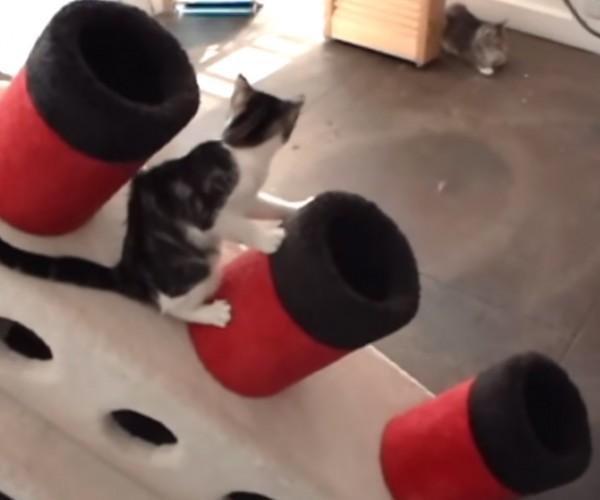 Titanic Cat Condo: I'm Purring Jack!