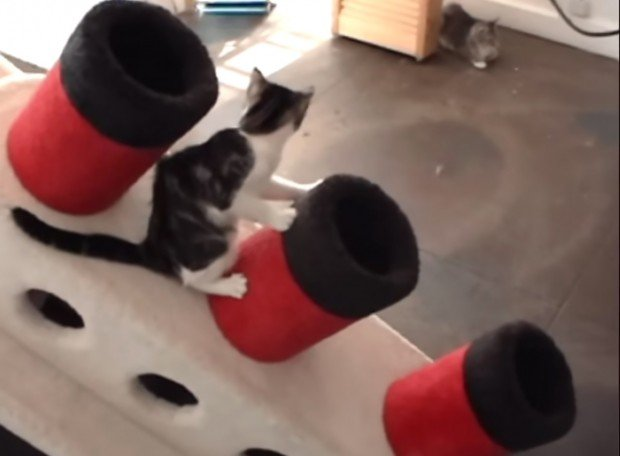 titanic_cat_condo_1