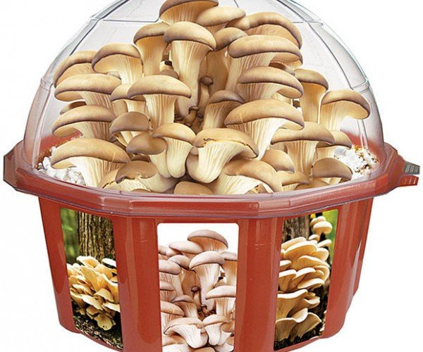 Mushroom Dome Lets You Grow Your Own Shrooms
