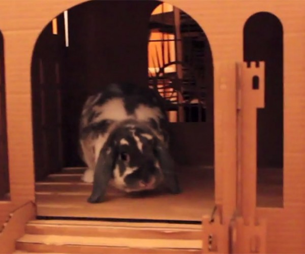 Wallace The Rabbit Eats His Castle