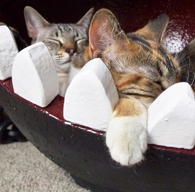 chain_chomp_cat_bed_2a