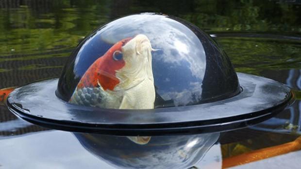 fish-dome-2