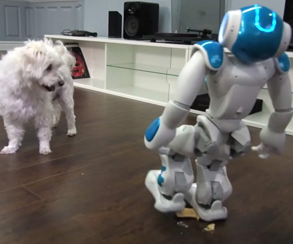 Robot Tries to Feed a Dog Pop-Tart, Does Not Go as Planned