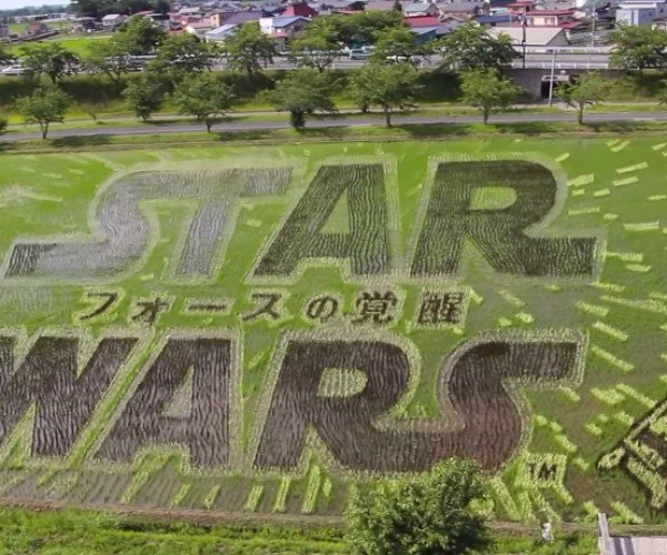 Star Wars Rice Paddy Art: Lord Vader, Riiiice