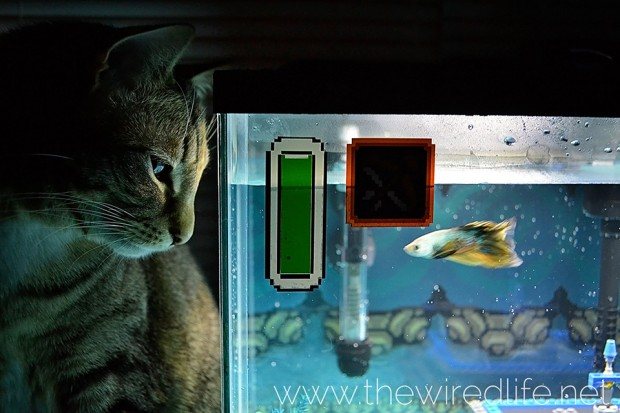 the_legend_of_zelda_aquarium_by_kelsey_kronmiller_wired_life_3