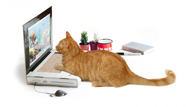 cat_scratch_laptop_1