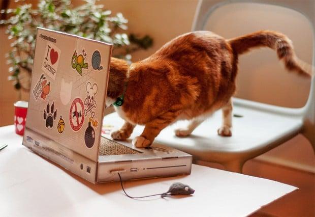 cat_scratch_laptop_3