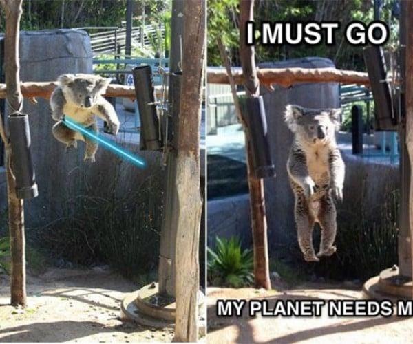 Jedi Koala: Luke Branchwalker
