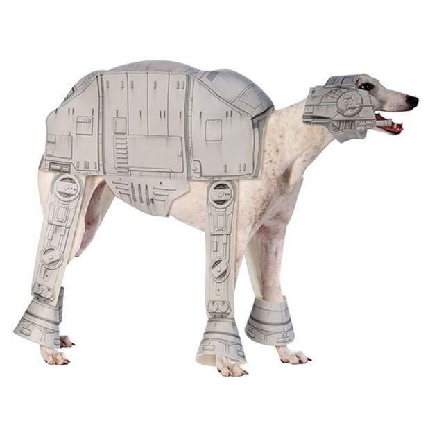 dog-at-at