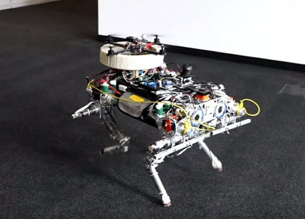 dog_bird_robot_1