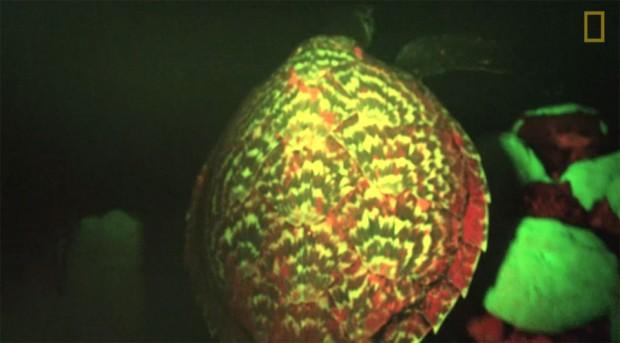 glow-turtle-tb