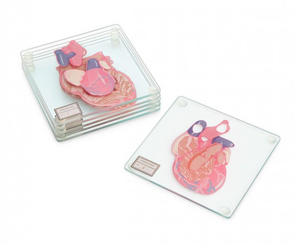 Anatomic Heart Specimen Coasters: Heart of Glass