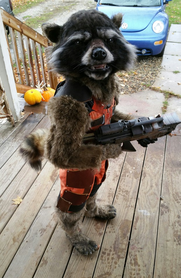 Diy Kid S Rocket Raccoon Costume Guardian Of The Front