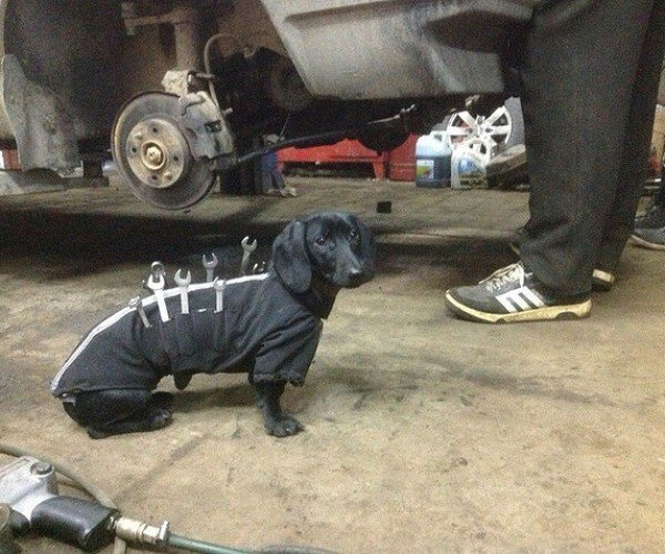 This Wiener Dog Is the Best Mechanics' Helper Ever