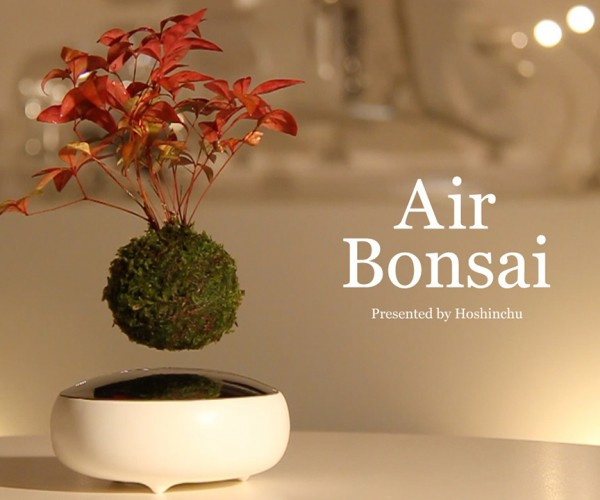 Air Bonsai Floating Plant: Magnepiphyte