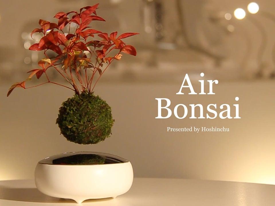air bonsai floating plant magnepiphyte technabob. Black Bedroom Furniture Sets. Home Design Ideas
