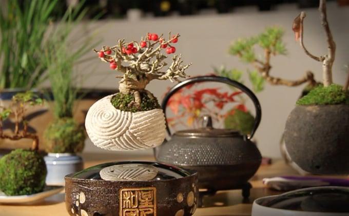 Air bonsai floating plant magnepiphyte technabob for Levitating plant